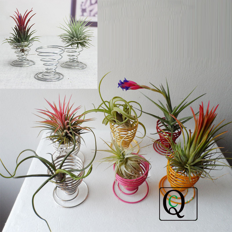 Air plant tillandsia egg cup holder container flower home for Air plant holder ideas